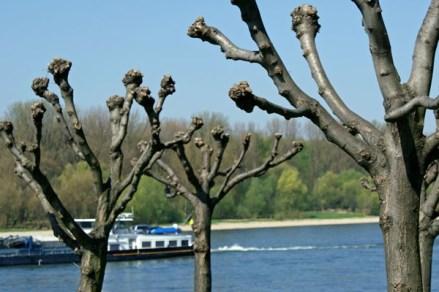 Am Rhein entlang