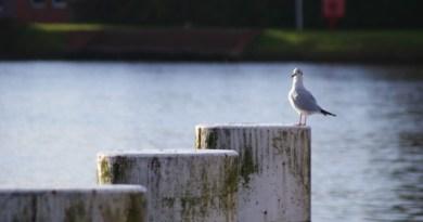Seeluft in Emden