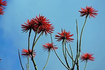 Blüten auf Madeira