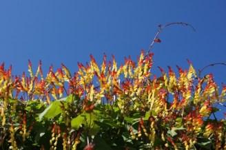 Pflanzen in Genf