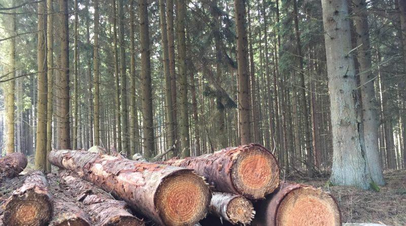 Auf dem Köhlerpfad bei Langweiler