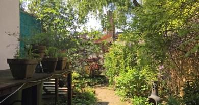 In einem Ehrenfelder Hinterhof