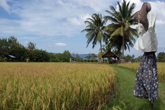 Felder auf Langkawi