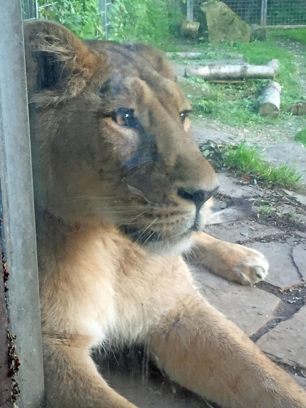 10 Dinge, die ich nicht über den Kölner Zoo wusste