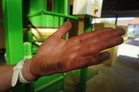 Hopfenernte macht schmutzige Hände