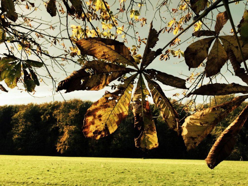 Herbst am Decksteiner Weiher in Köln
