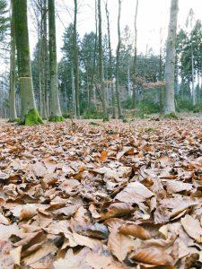 Herbst im Friedwald