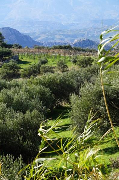 Kreta ist grün