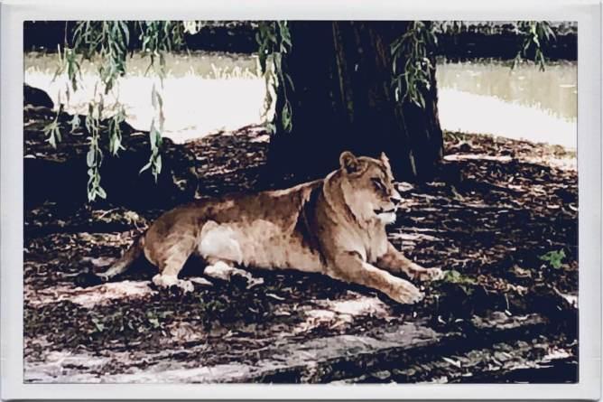 Löwe im Schatten