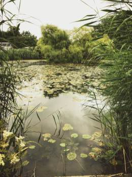 Der Teich im Botanischen Garten inMünster