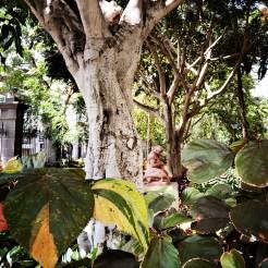 Botanischer Garten in Aruca