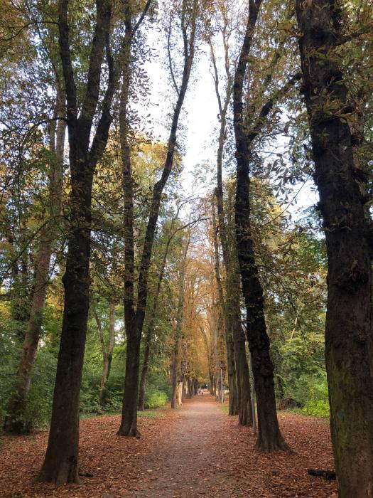 Herbstlauf