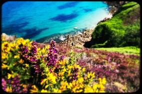 Blumen auf Jersey