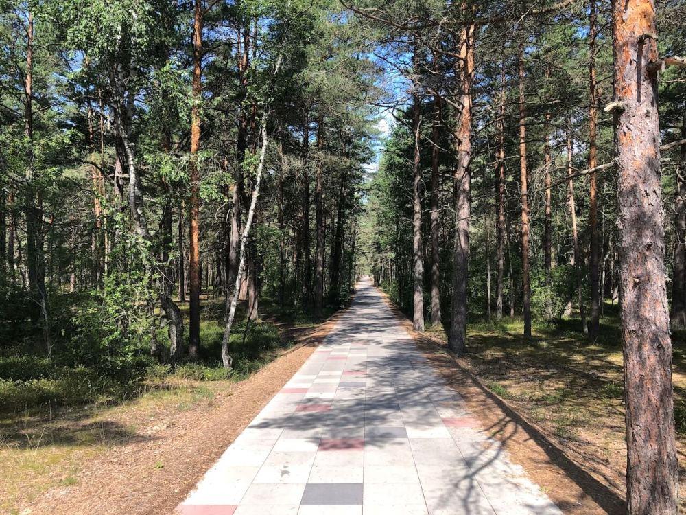 An die Ostsee-Strände geht es durch Wälder