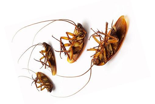 Как правильно использовать заговор от тараканов?