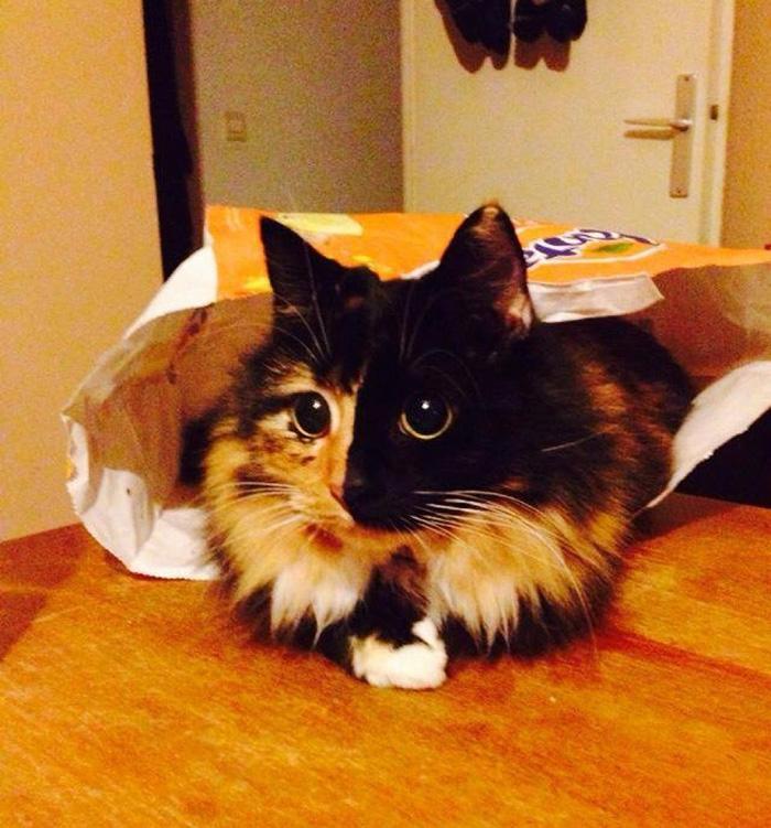 blind-cat-chimera-calico-jasmine-sandra-coudray-4