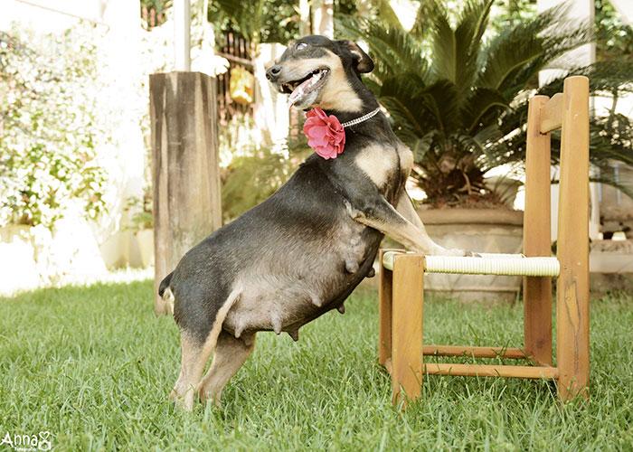 dog-maternity-photo-shoot-lilica-ana-paula-grillo-18