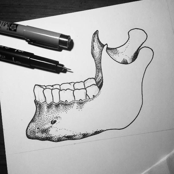 The masseter, or jaw muscle, is the strongest muscle in the human body based on its weight.