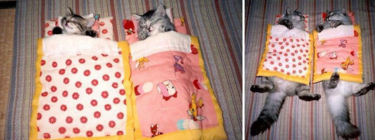 All tucked in for bed.
