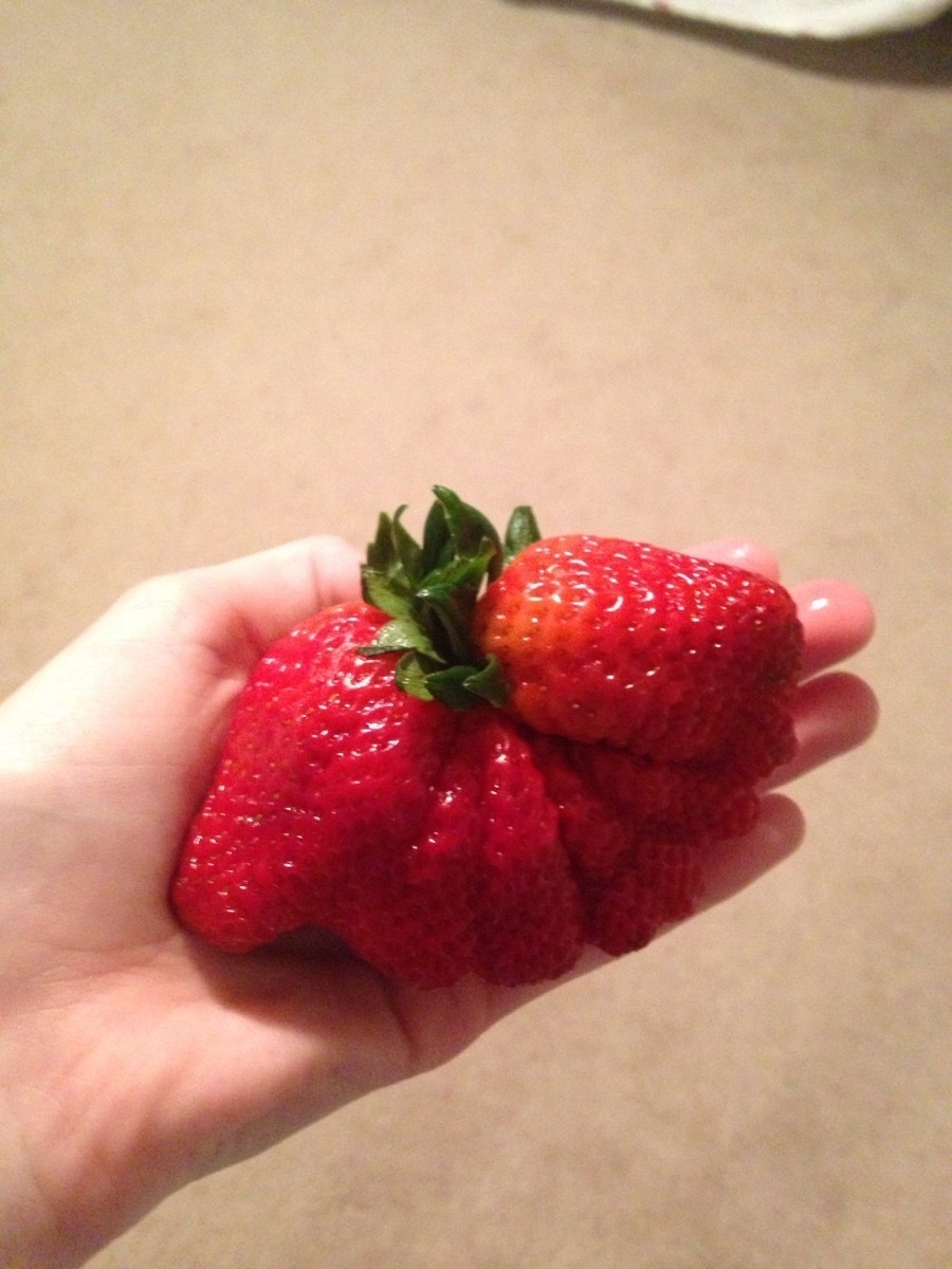 A massive, overgrown strawberry.