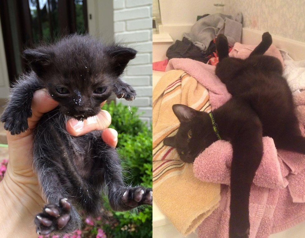 "Reddit user says, ""Found abandoned in the gutter at 2 weeks old. Now fat and happy!!"""