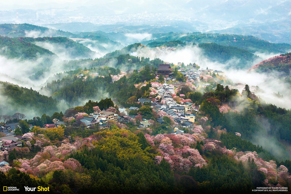 An aerial view of Mt. Yoshino, one of the most popular and beautiful spots for cherry blossoms in the country.