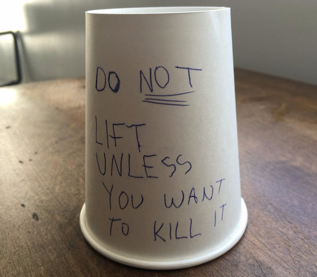 Leave this message and cup on your kid's homework desk.