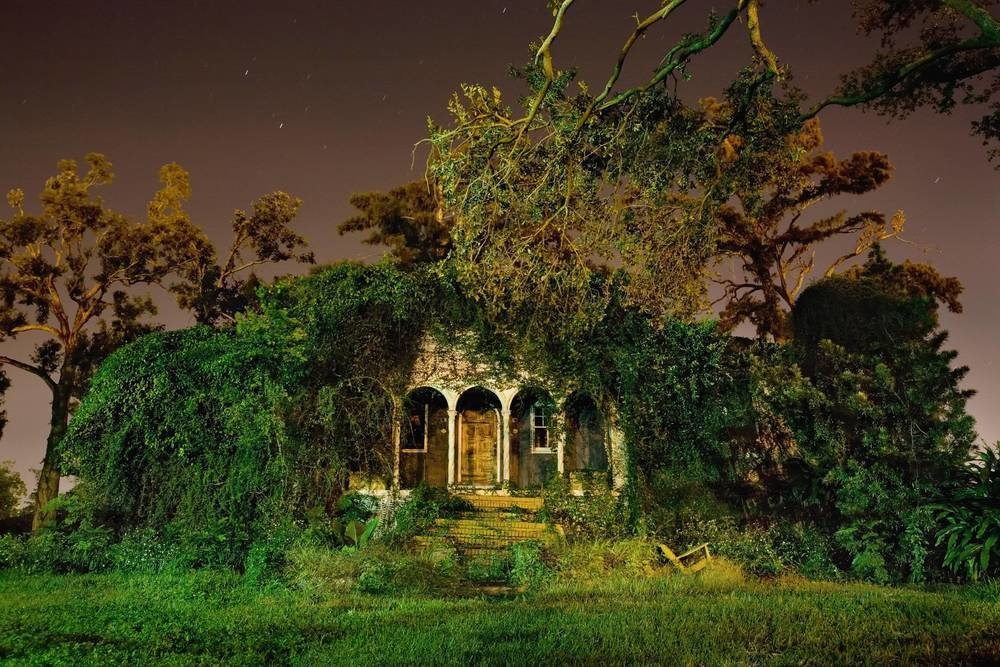 Greenery are the new tenants of this abandoned house in New Orleans.