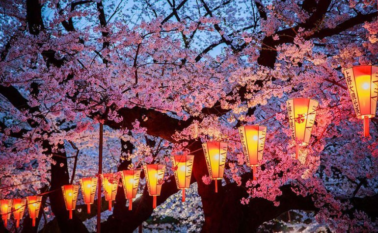 spring-japan-cherry-blossoms-national-geographics-21