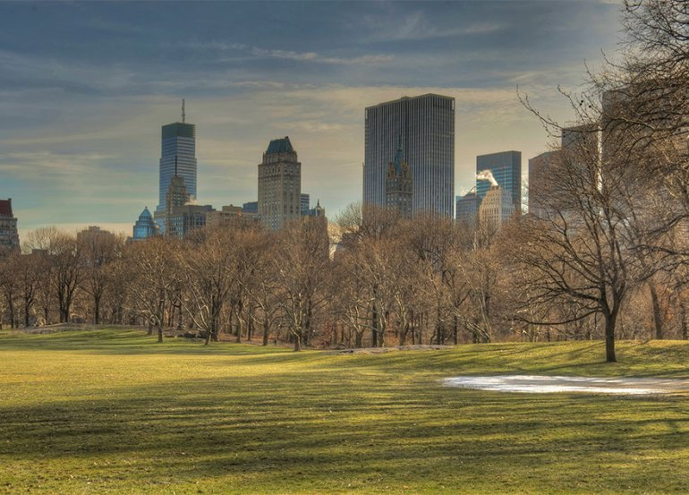 Walking In Sheep Meadow, In New York's Central Park, United States