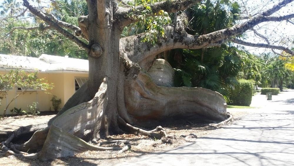 This incredibly unique tree.