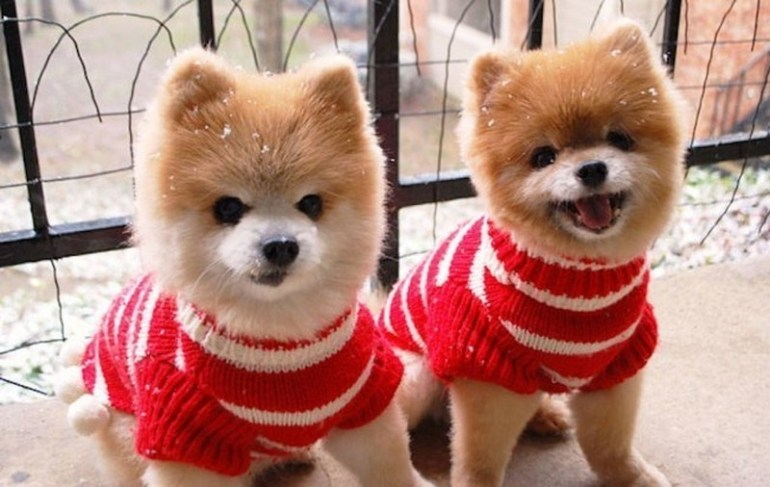 One is happier than the other, but both are equally adorable.