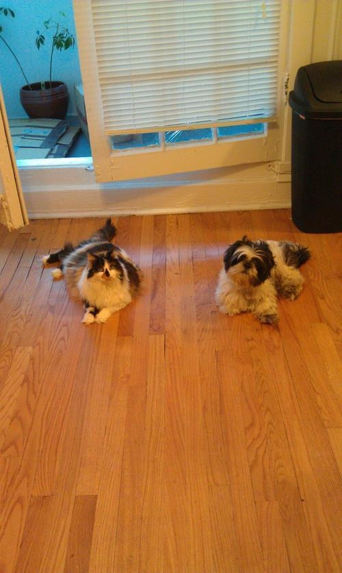 Yoga twins!