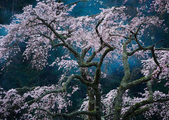 Fascination, Japan