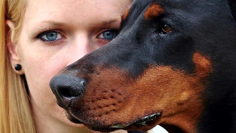 Peut-on vous interdire de posséder un animal de compagnie lorsque vous êtes locataire?