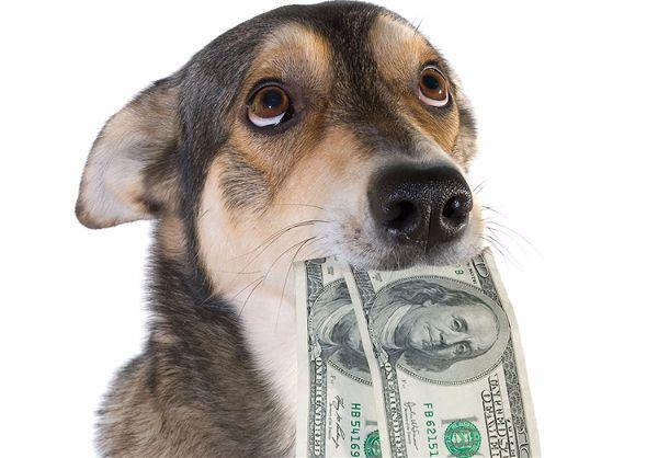 L'impôt sur les chiens a-t-il existé en France ?