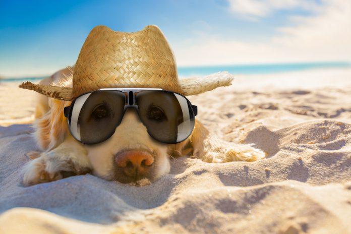 Période estivale : l'été n'est pas un long fleuve tranquille pour vos animaux, découvrez-en les dangers