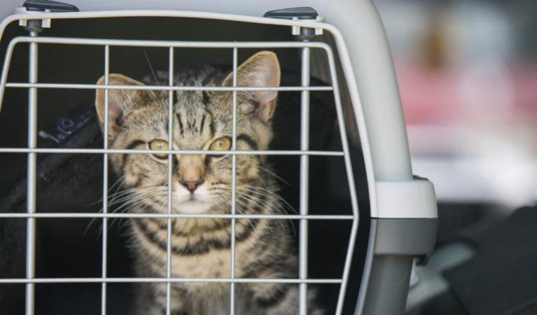 Cage de transport : comment habituer son chat ?