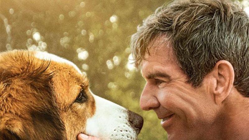 Mes autres vies de chien : sortie en salle le 21 août