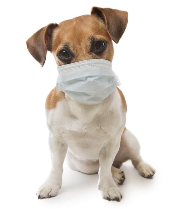 Animaux et Coronavirus : l'exactitude des liens entre le Covid-19 et les animaux domestiques