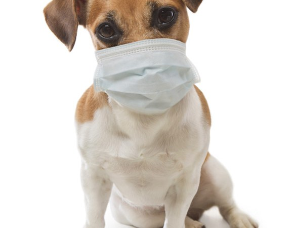 animaux-et-coronavirus