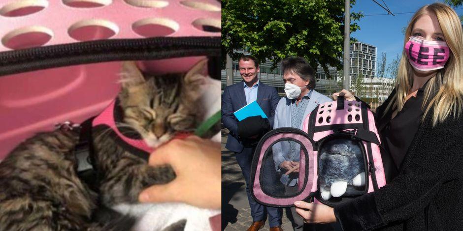 Le chaton péruvien Lee ne sera pas euthanasié