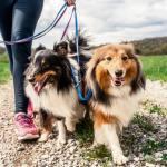 Confinement : mise au point quant à la promenade de son animal