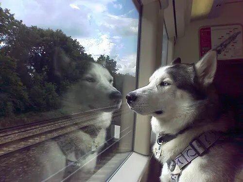 voyager en train avec son chien