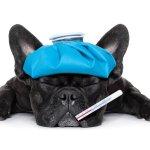 Vétérinaires : pourquoi les tarifs sont-ils différents ?