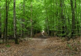 Las Łagiewniki - spacer