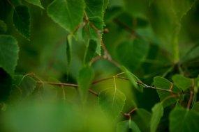 Z żywota leśniej gęstwiny
