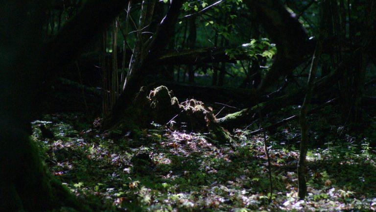 Wposzukiwaniu oznak śmierci [odcinek 1]