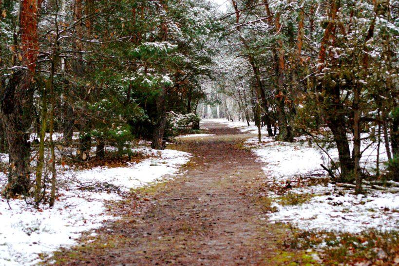 Chcąc doświadczyć zimowego lasu
