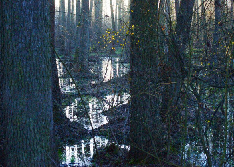 Baśniowy Las